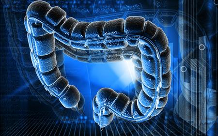 large intestine: Ilustraci�n digital del intestino grueso en el fondo de color Foto de archivo