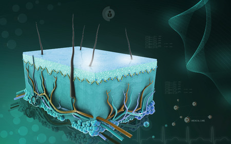 muscle cell: Digital illustration of Skin in colour background Stock Photo
