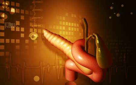 pancreas: Digital illustration of pancreas  in colour background Stock Photo