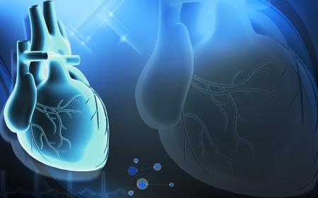 medical heart: Digital illustration of  heart  in  colour  background