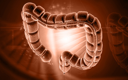 intestino grueso: Ilustración digital del intestino grueso en el fondo de color Foto de archivo