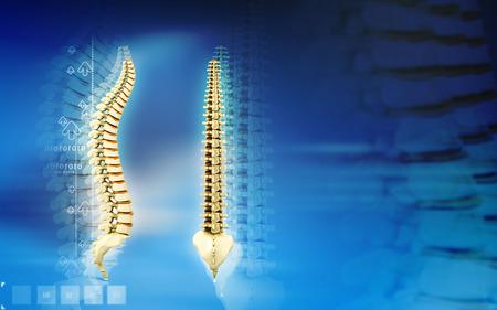 back bone: Digital illustration  of back bone in    colour background