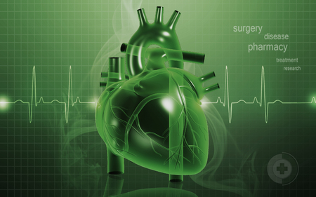 ventricle: Digital illustration of  heart  in  colour  background