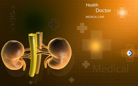 adrenal: Digital illustration of  kidney in colour  background Stock Photo