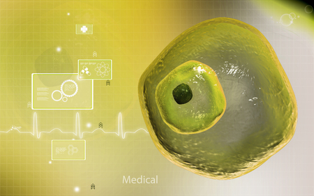 ovum: Digital illustration of  ovum cell in colour  background