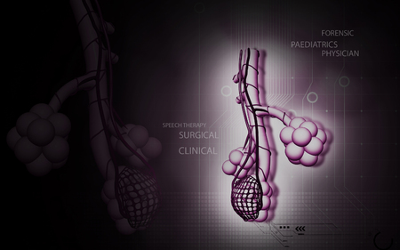 alveolos: Ilustración digital de alvéolos en color de fondo