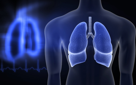 vitals: Digital illustration of human lungs in colour background