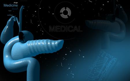 pancreas: Digital illustration of pancreas  in colour background Stock Photo