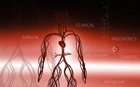 vertebrates: Digital illustration of vascular system in colour background Stock Photo