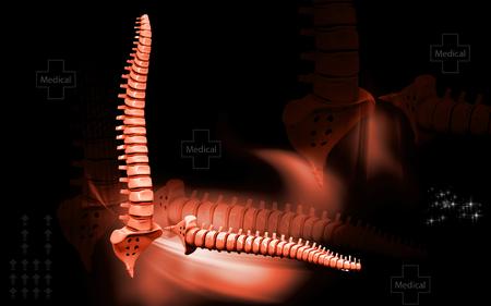 Digital illustration  of back bone in    colour background