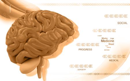 brain illustration: Digital illustration of  brain in colour  background