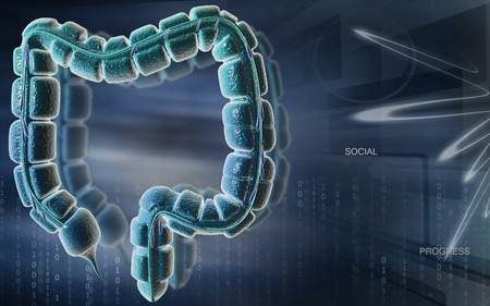 intestine: Digital illustration of large intestine in colour background Stock Photo