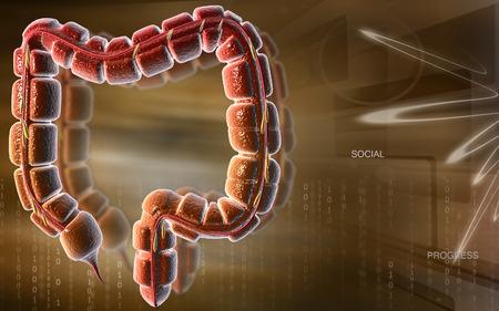 large bowel: Digital illustration of large intestine in colour background Stock Photo