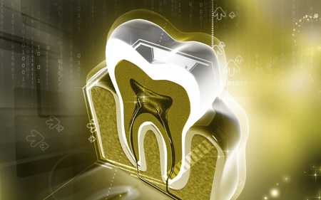 Digital illustration of  teeth cross section   in  colour  background