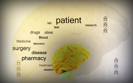 Digital illustration of  brain in colour  background