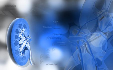Digital illustration of   Cross section kidney in colour  background Banco de Imagens - 53745856