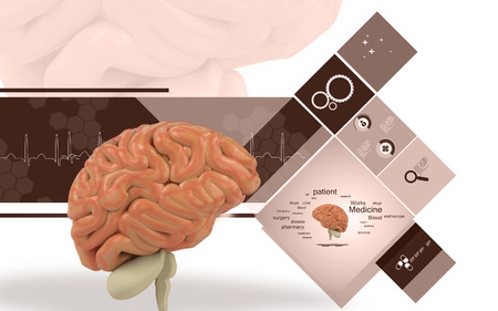 Digital illustration of  brain in colour  background Banco de Imagens - 59996583