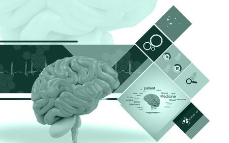 oblongata: Digital illustration of  brain in colour  background