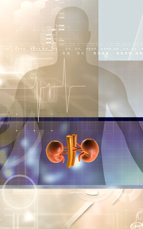 inferior: Digital illustration of  kidney in colour  background Stock Photo