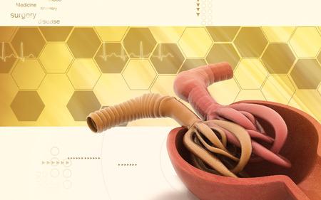 Digital illustration of capsule of bowman in colour background Banco de Imagens - 62966658