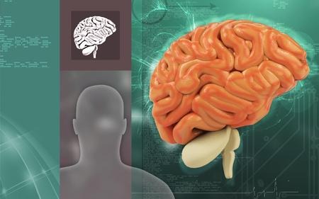 Digital illustration of  brain in colour  background Banco de Imagens - 63573547