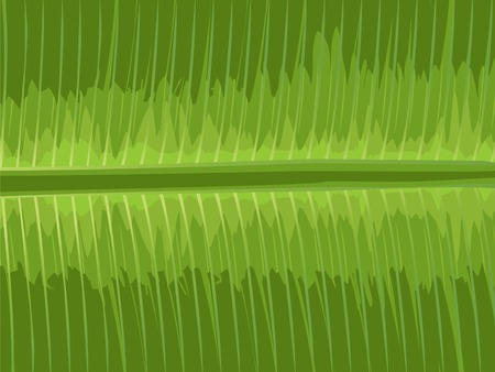 illustration of close up of banana leaf Illustration