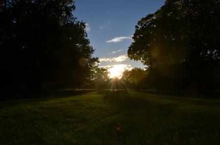 Sunlight between the tree Фото со стока
