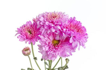 flora: Pink blossom flora Stock Photo