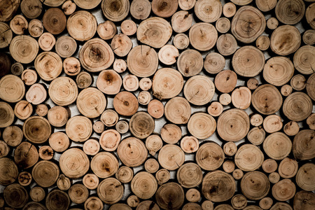 section: Cross section wood background