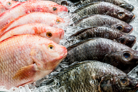 red  fish: Fresh fish in the market