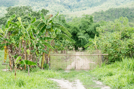 dirtroad: Bamboo fence and dirtroad crossing the green countryside