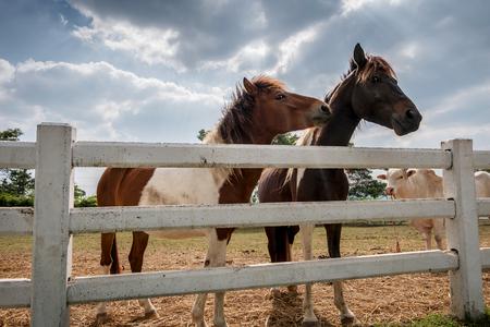 paddock: Couple horses in paddock Stock Photo