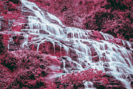 forrest: Waterfall in forrest