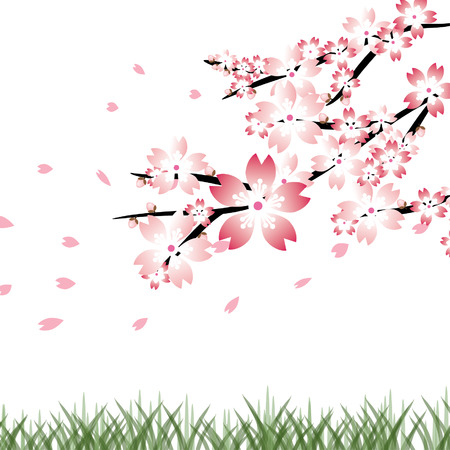 Cherry blossoms background, Sakura vector