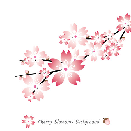 Cherry blossoms background, Sakura vector