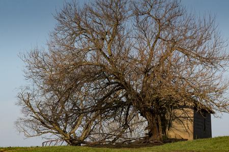 An old gnarly tree Zdjęcie Seryjne