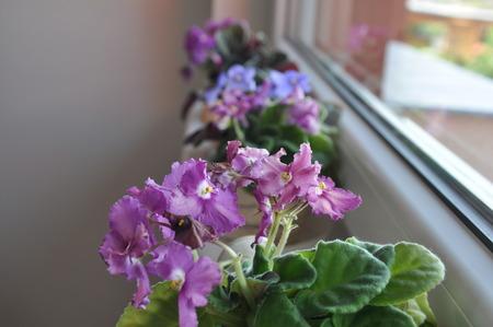 Zti of flowers