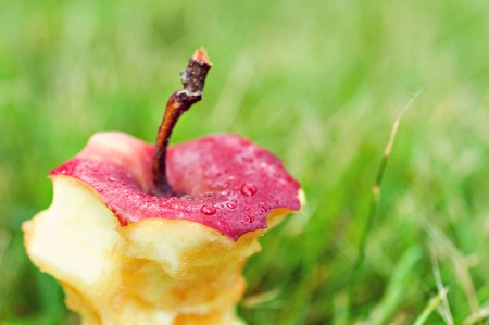 Apple core with stem in grass