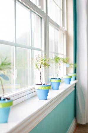 window seal: Plants in window seal Stock Photo
