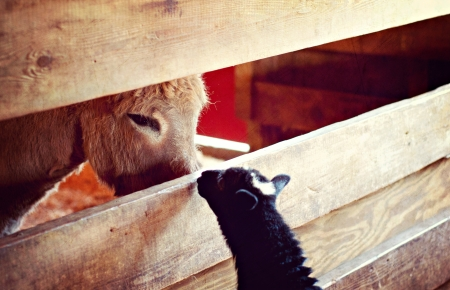 Curious Neighbors