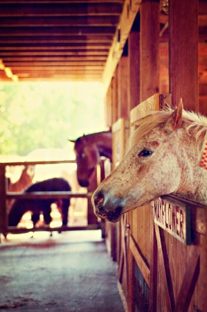 Horse of farm Stock Photo