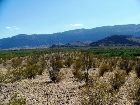 ocotillo: desert landscape with mountains in background and ocotillo in foreground Stock Photo