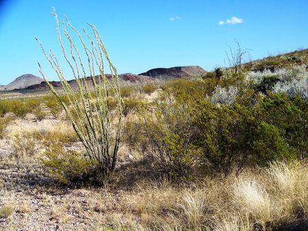 ocotillo: desert ocotillo and creasote with purple mountain range in background Stock Photo