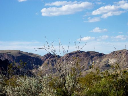 ocotillo: large desert ocotillo with mountain range in background Stock Photo