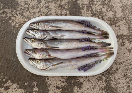 Fresh fish cleaned and prepared for cooking with sprigs of lavender on a white plate on a textured stone background. Freshly caught hake