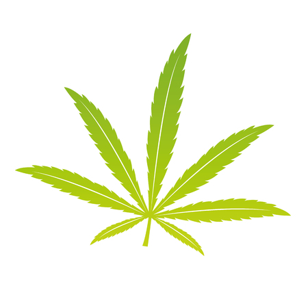 green cannabis leaf isoladet on white background vector illustration EPS10