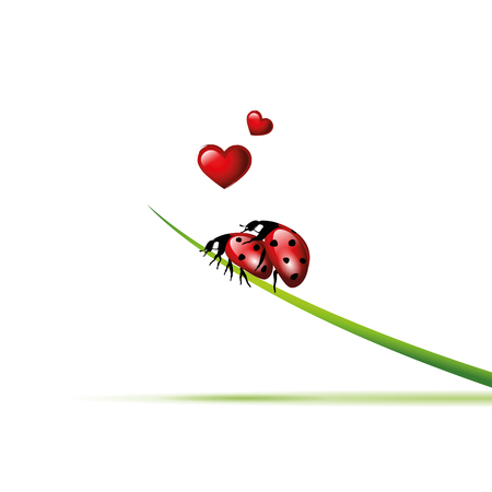 two ladybugs make love on a blade of grass vector illustration EPS10