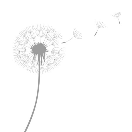 dandelion silhouette with flying seeds isolated on white background vector illustration EPS10 일러스트