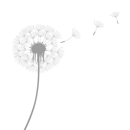 Silhouette de pissenlit avec des graines volantes isolé sur fond blanc vector illustration EPS10