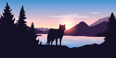 wolf looks into the distance of the mountain landscape at sunrise in purple colors vector illustration EPS10